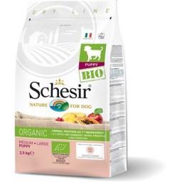 Schesir (pies) - suchy...